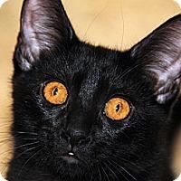Adopt A Pet :: Amelia Earheart - Monroe, GA