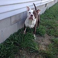 Adopt A Pet :: Santana - Centerburg, OH