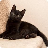 Adopt A Pet :: Zeppelin - Houston, TX
