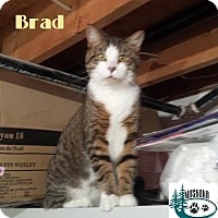 Adopt A Pet :: Brad - Extremely friendly! - Huntsville, ON