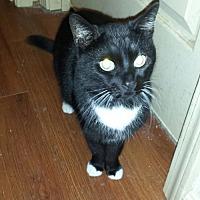 Adopt A Pet :: Peppie - Manchester, TN