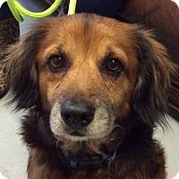 Adopt A Pet :: Crosby - Houston, TX