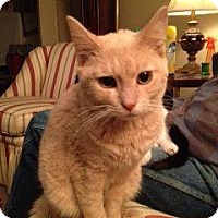 Adopt A Pet :: Dallas - Pittstown, NJ