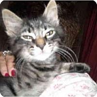 Adopt A Pet :: Dillon - Riverside, RI