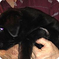 Adopt A Pet :: Puppy - Chewelah, WA