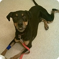 Adopt A Pet :: Darby - Oberlin, OH