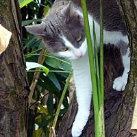 Adopt A Pet :: Marina - Naples, FL