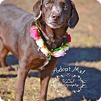Adopt A Pet :: Brownie - Fort Valley, GA