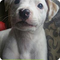 Adopt A Pet :: Everest pending adoption - Manchester, CT