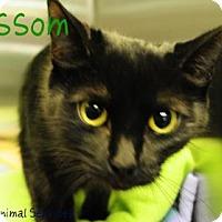 Adopt A Pet :: Blossom - Hamilton, ON