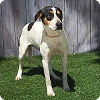 Adopt A Pet :: A046062 - Lake Panasoffkee, FL