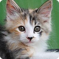 Adopt A Pet :: Gigi - Palmdale, CA