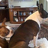 Adopt A Pet :: Mindy and Penny - Temecula, CA