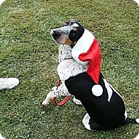 Adopt A Pet :: Betsy~Prison Obedience Trained - Hazard, KY