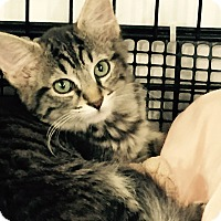 Adopt A Pet :: Ashlie - Speonk, NY