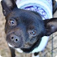 Adopt A Pet :: Arco - Meridian, ID
