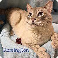 Adopt A Pet :: Remington - Foothill Ranch, CA
