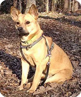 Shepherd (Unknown Type) Mix Dog for adoption in Atlanta, Georgia - L.L.Bean