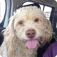 Adopt A Pet :: Archer - Encino, CA