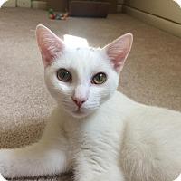 Adopt A Pet :: Lancelot - East Brunswick, NJ