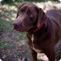 Adopt A Pet :: Mikey - Brattleboro, VT