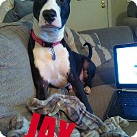 Adopt A Pet :: JAX - Greenville, OH