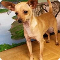 Adopt A Pet :: Peanut - East Hartford, CT