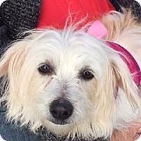 Adopt A Pet :: JANTZY - Rancho Cucamonga, CA