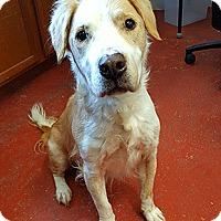 Adopt A Pet :: Turbo - Oakland, CA