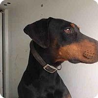 Adopt A Pet :: Logan - Tracy, CA