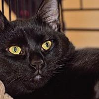 Adopt A Pet :: Bijou - Lyons, IL