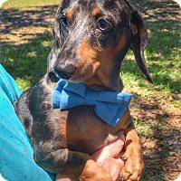 Adopt A Pet :: Cooper - Weston, FL