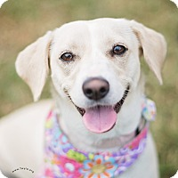 Adopt A Pet :: Hope - Kingwood, TX
