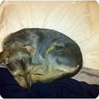 Adopt A Pet :: Ella in Houston - Houston, TX