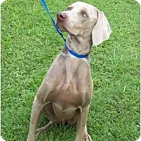 Adopt A Pet :: Dion **ADOPTED** - Eustis, FL