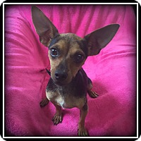 Adopt A Pet :: Piper - Indian Trail, NC