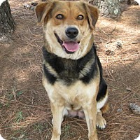 Adopt A Pet :: Rukie - Huntsville, AL