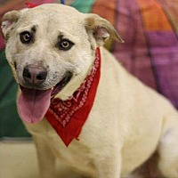Shepherd (Unknown Type) Mix Dog for adoption in Lyles, Tennessee - Lucy