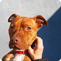 Adopt A Pet :: Delilah - Whitehall, PA