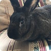 Adopt A Pet :: Noelle - Watauga, TX