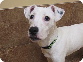 Terrier (Unknown Type, Medium) Mix Puppy for adoption in Appleton, Wisconsin - Lucas *REBOUND*