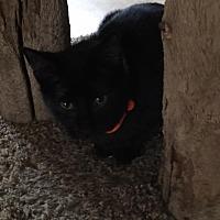 Adopt A Pet :: Madison - Algonquin, IL