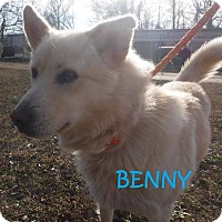Adopt A Pet :: Benny - Batesville, AR