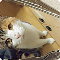 Adopt A Pet :: Sophia - Lancaster, PA