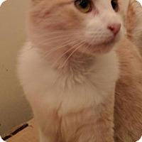 Adopt A Pet :: Salvadore - Glendale, AZ