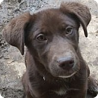 Adopt A Pet :: Dora - Evergreen, CO
