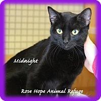 Adopt A Pet :: Midnight - Waterbury, CT