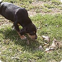 Adopt A Pet :: Sissie - Danbury, CT