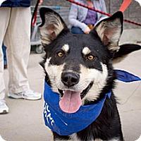 Adopt A Pet :: Hachi - Saskatoon, SK