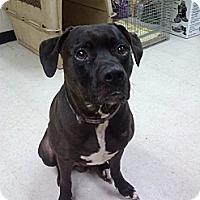 Adopt A Pet :: Noah - Willington, CT